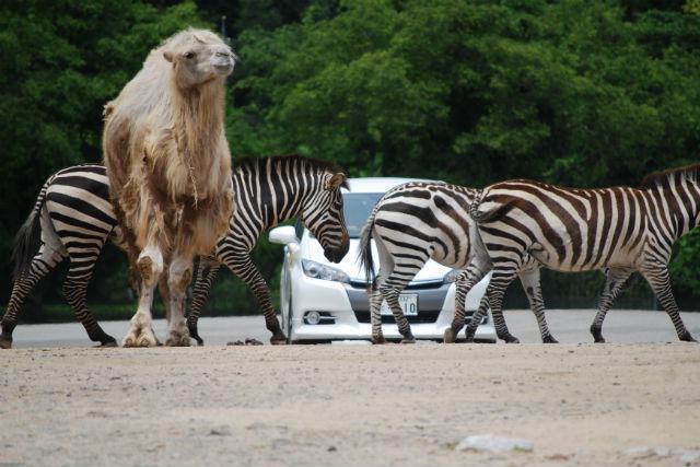 秋吉台自然動物公園サファリランド